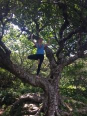 Tree...in a tree